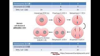 DSE Bio 細胞分裂精讀班 Cell Division Intensive