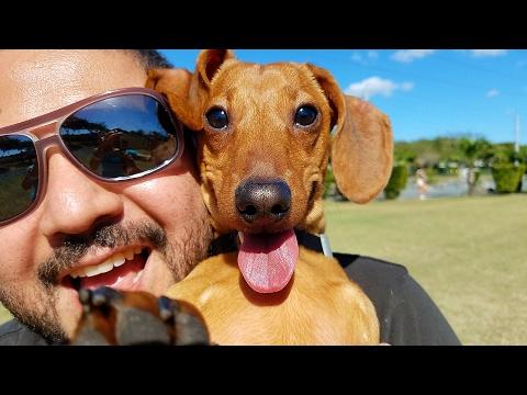PUPPY DOG BEST TRICKS-TRAINING // VILLAS CHANNEL VLOG