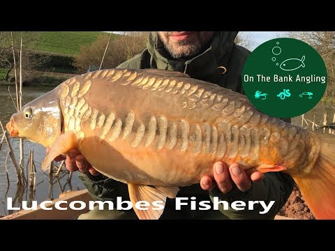 Carp Fishing At Luccombes Coarse Fishery - Re-opening