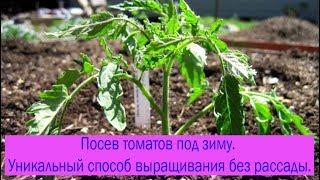 видео Посевы на рассаду томатов и перцев в 2015 году