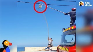Cat Dangling From Wire CAUGHT by Rescuers  | The Dodo
