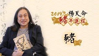 楊天命2019豬年十二生肖運程 《豬》