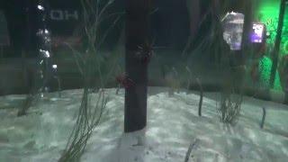 Подводный мир- пятнистые  угри, живут спрятавшись  в песке и крабик..