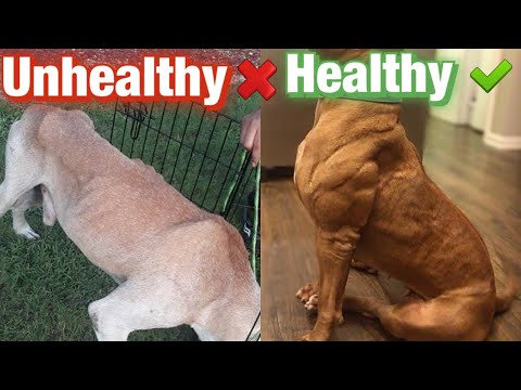 Healthy Weight For Dogs! Is Your Dog UNDER FED??
