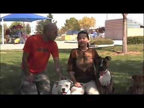DOG TRAINING-PIT BULLS EARN CANINE GOOD CITIZEN CERT.