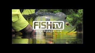O Canal Oficial da Pesca Esportiva FISH TV AO VIVO Se inscreva e ative o sininho!