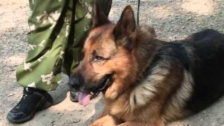 Полицейские-собаководы