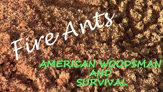 2 Ways to kill FIRE ANTS with Natural Remedies (No Pesticides)