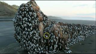 Video Mysterious Object Washes Up On New Zealand Beach, Baffling Locals download MP3, 3GP, MP4, WEBM, AVI, FLV Agustus 2017