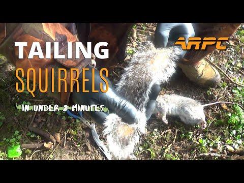 tailing-squirrels---air-rifle-pest-control
