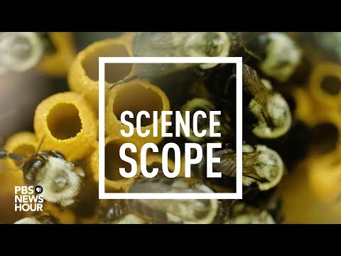 Your next happy hour buzz, brought to you by bees | PBS NewsHour