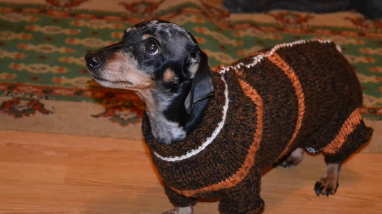 Ropa para perro salchicha tejido en crochet - YouTube