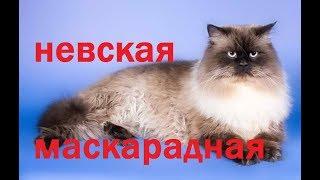 Все кошки мира: Невская маскарадная