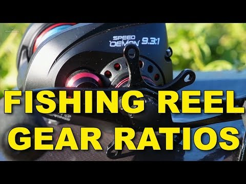 All About Fishing Reel Gear Ratios: The Definitive Guide | Kastking | Bass Fishing