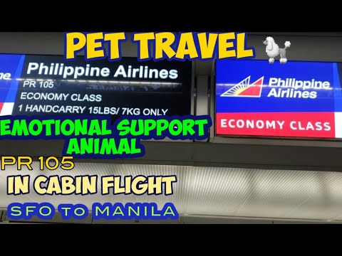 PET TRAVEL - Philippine Airlines PR 105. SFO to Manila. Emotional Support Animal 🐶   short version