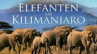 Elefanten im Kilimanjaro (2000) [Dokumentation]|Film (deutsch)