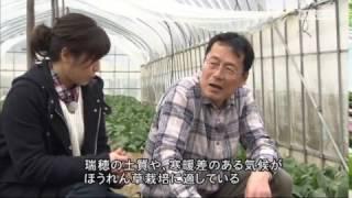 2017年3月放送 「ほうれん草 上田さん(京丹波町)」 昭和50年代頃からほ...
