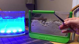 Ant farm compare two different Ant farms Gel Ant DreamWorks Antartist uncle Milton