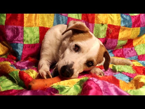 Rescued blind dog eating a carrot ASMR
