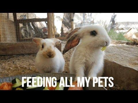 FEEDING ALL MY PETS