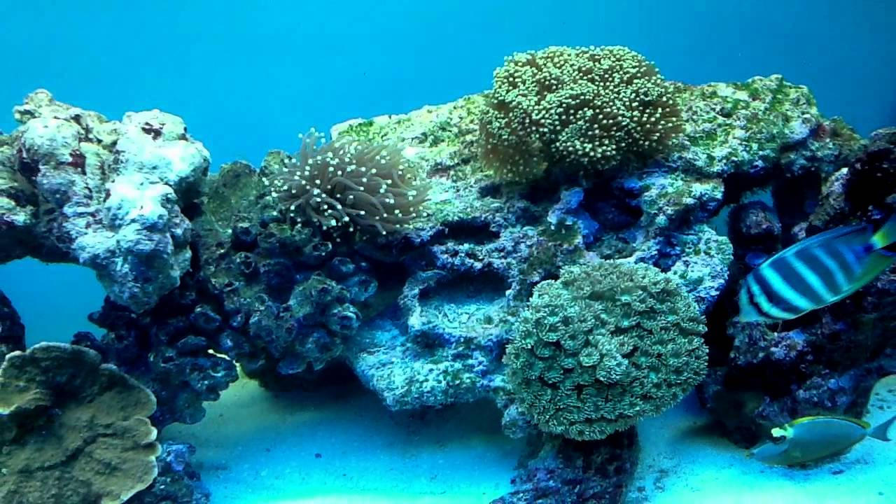 Acquario di barriera youtube for Acquario pesci tropicali