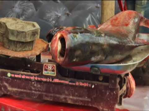 22 Oct, 2017 -  Fish fair organised in northeastern India