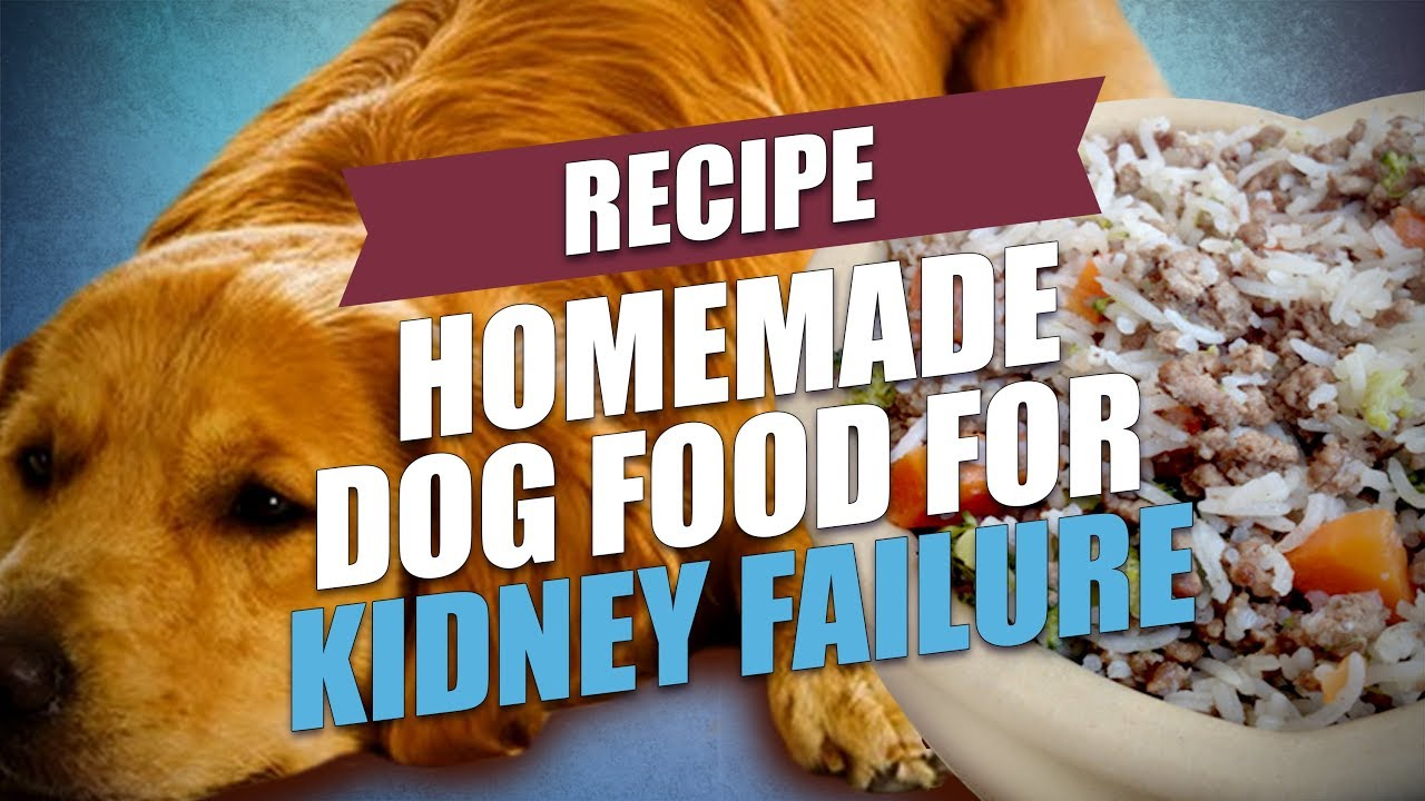 Homemade dog food for kidney failure recipe healthy and cheap homemade dog food for kidney failure recipe healthy and cheap forumfinder Choice Image