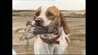 The Pointer - Pet Dog Documentary English