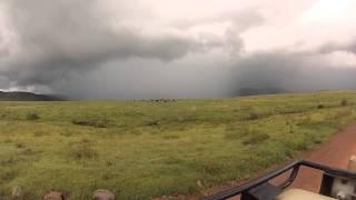 Safari at Ngorongoro Conservation Area - Tanzania