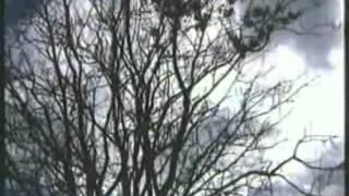 Невский пятачок