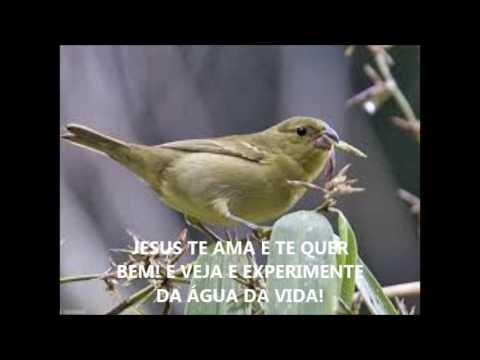 COLEIRO FÊMEA CHAMO DE FOGO! 01 MINUTO À MORNA, 01 HORA PEGA FOGO!