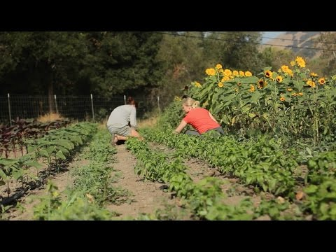 CAFF -  Building sustainable and resilient food & farming systems