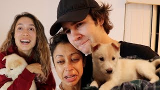 SURPRISING DAVID'S GIRLFRIEND LIZA KOSHY WITH MY GIRLFRIEND'S NEW PUPPY!! Video