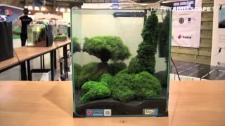 aquascaping aquarium ideas from zoobotanica 2012 part 8