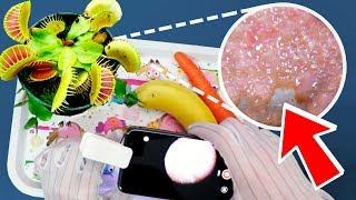 Mikroskopla ETOBUR BİTKİ İnceleme! | Çok Şaşırtıcı Görüntüler
