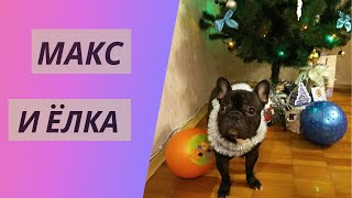 Видео про собак