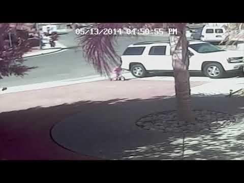 Kat redt kind van hond