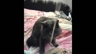 Котик играется с длиной змейкой из резинок🐱🐱🐱