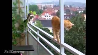 Забавно видео: Stupid Cats Fails