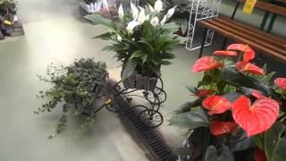 Смотреть видео купить комнатные растения Киев