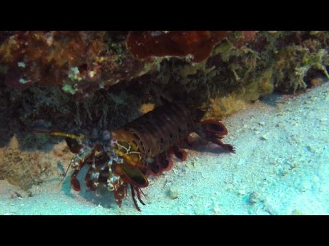 DIVING IN NORTH SULAWESI - INDONESIA 4K