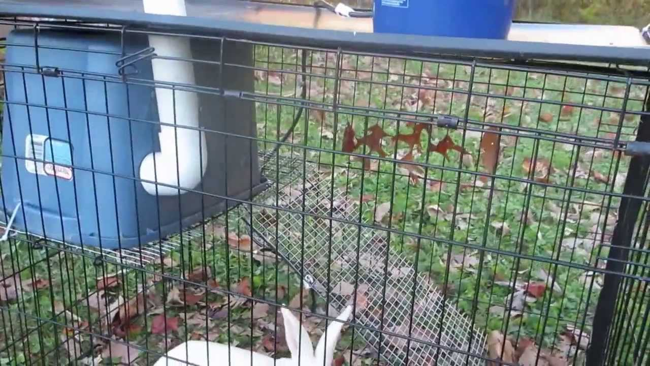 Dog Crate Rabbit Tractor Youtube
