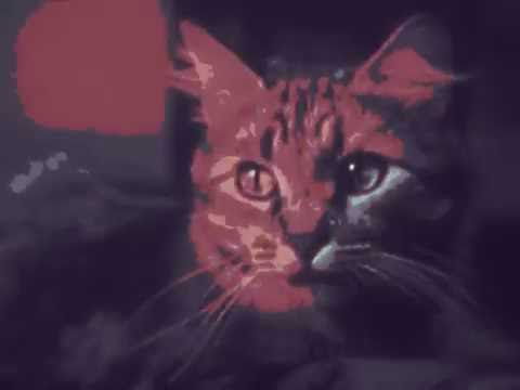 Private Life of a Cat (1947) An Amazing Film About Cats by A