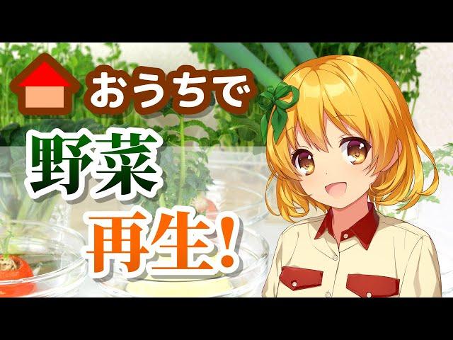 【リボベジ】かんたん!再生野菜【STAY HOME】