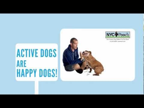 Dog Walker NYC | Greatest Dog Walkers On The Planet | NYC POOCH