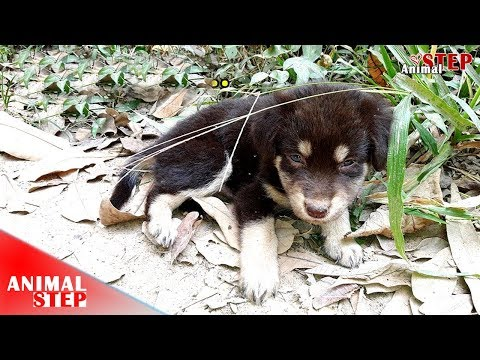 Lonely Stray Puppy Lives in the Woods without Feeding