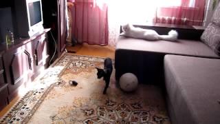 Два кота (фильм 2)