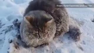 Спасение кота, который вмерз лапами в лед на 35 градусном морозе