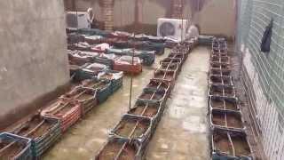 بداية زراعة الفراولة ((فوق سطح المنزل)) 1