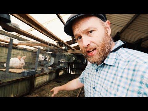 Raising Rabbits | FOR DOG FOOD